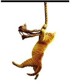cat_corde